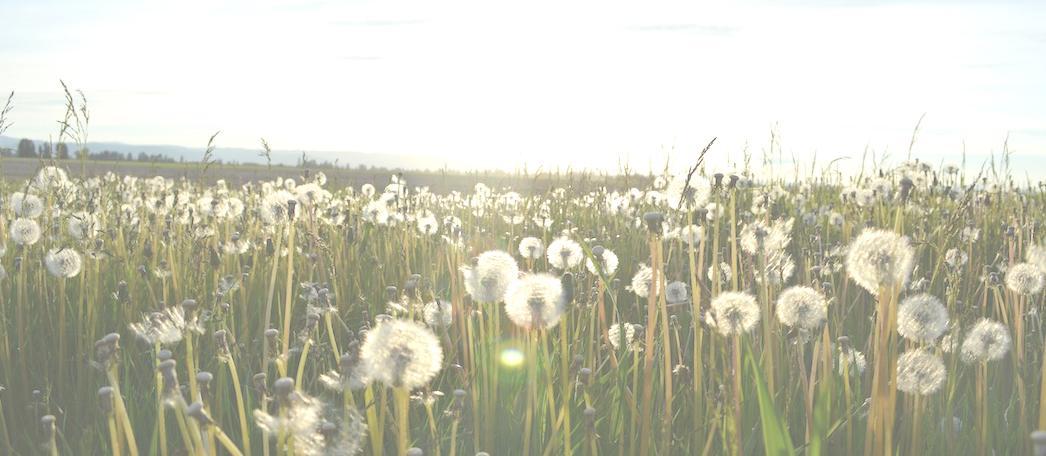 champs fleurs 2